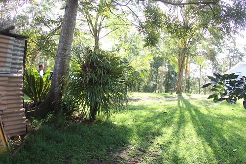 nO.3  067 In the Bush on the Mid North Coast
