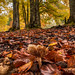 That's all fall(ks) ©Paco CT