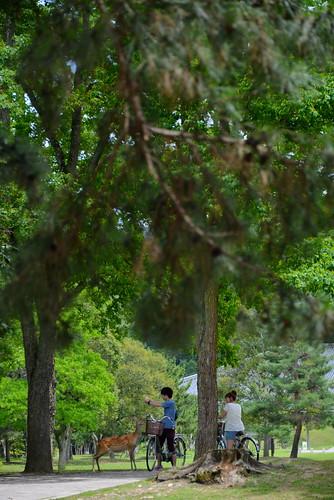 2012夏日大作戰 - 奈良 - 鹿 (10)