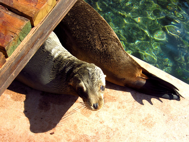 Cute Sealions in the Galapagos Islands