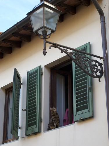 Cat looking at lantern - Costa San Giorgio, Firenze