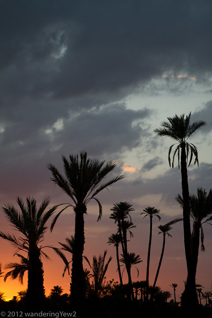 Marrakech Oasis: Sunset