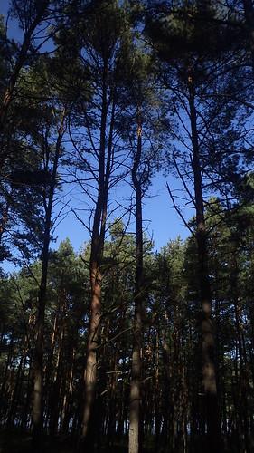 W Lesie w Sztutowie by xpisto1