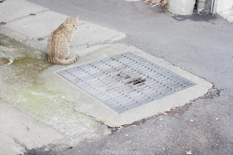 +猫ツアー+