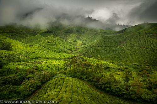 verde green nikon tea highland cameron malaysia plantation ipoh paesaggio enrico d300 tokina1116mm panoramafotográfico ghiberto blinkagain malesia2012