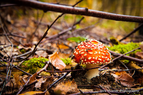 fly agaric by Dirk0608