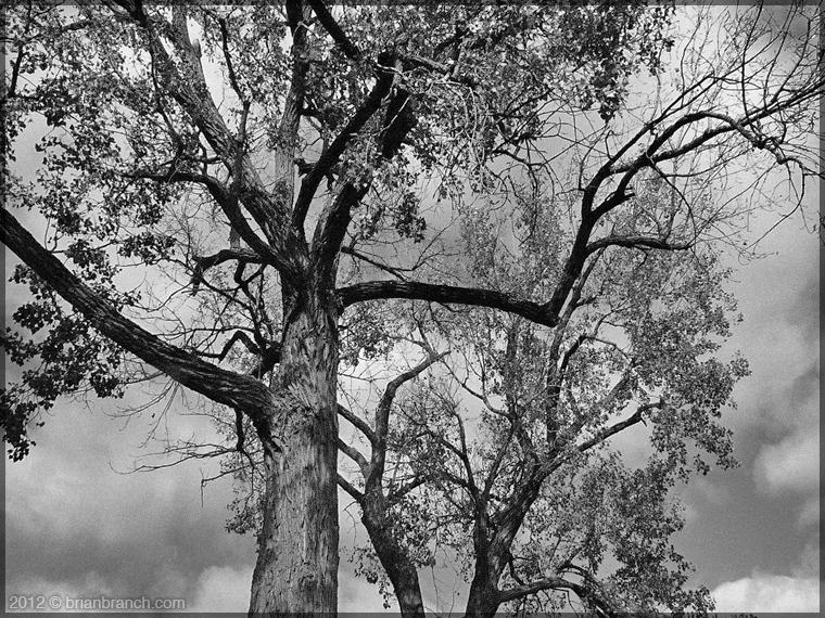 P1290039_fall_tree