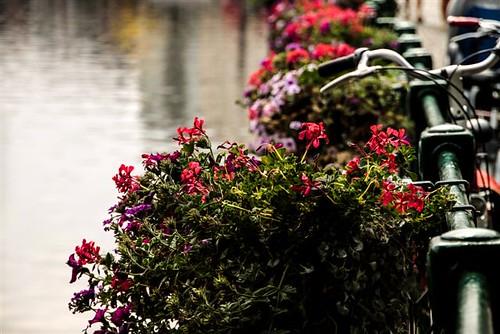 Riverside by margalice / marga