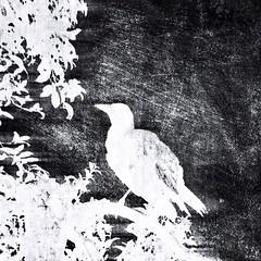 Avian Activities III: Regal Am I | Trying the Scratchcam upd