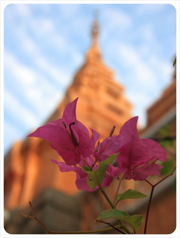 phnom penh flower & temple