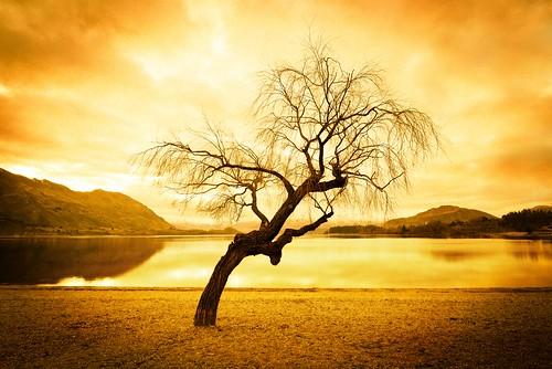 Another Tree In Wanaka