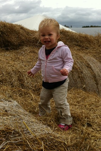 Lucy on the hay bales at the farm