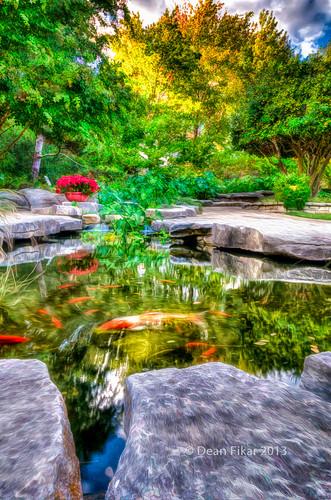 fish pond texas unitedstates koi botanicalgardens fortworth