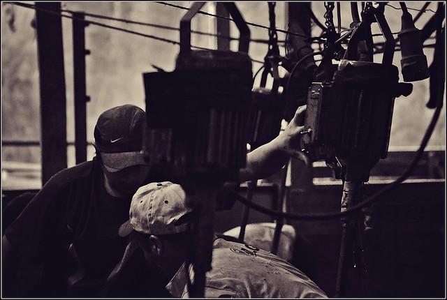 El Silencio de los Corderos - Fotografía Propia