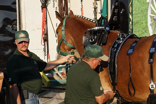 Grooms and Clydesdale, Suttler Post Farm in Mechanicsville