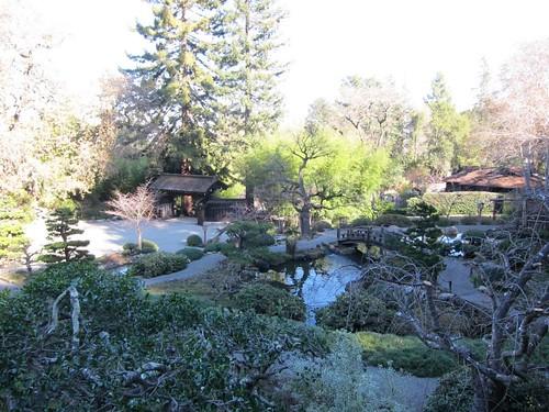Hakone Japanese Gardens, Saratoga, CA, tree IMG_2404