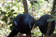 Birds 'whispering to each other'