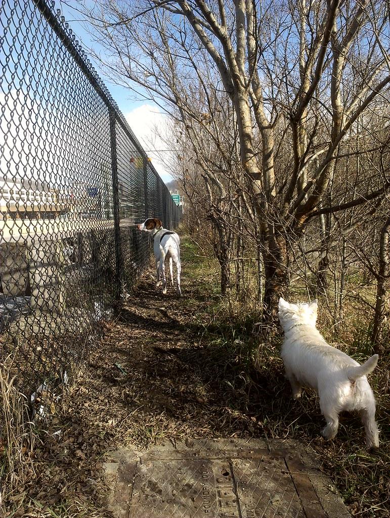 Fido Field dog park