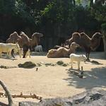 Zoo der zinnen