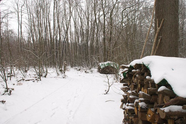 DSC_5537 logs and snow in the woods