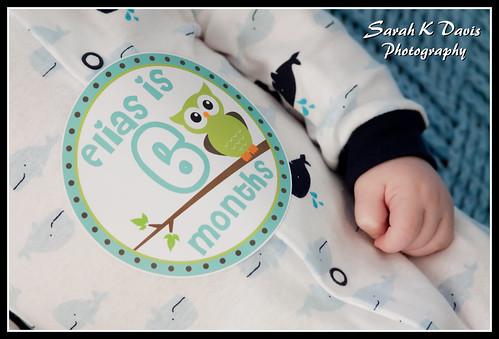 Elias 6 Mo. Mini