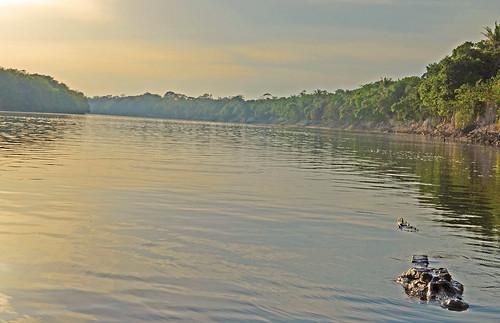 Mike Dawkins in the Amazon