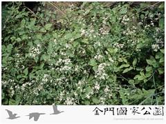 威靈仙-03