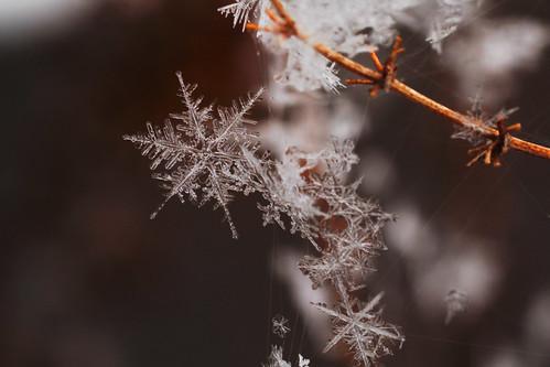 [フリー画像素材] バックグラウンド, 雪の結晶 ID:201302070400