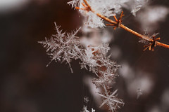 [Free Images] Backgrounds, Snowflake / Snow Crystal ID:201302070400