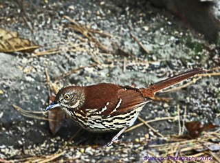 Birds of pennsylvania join group