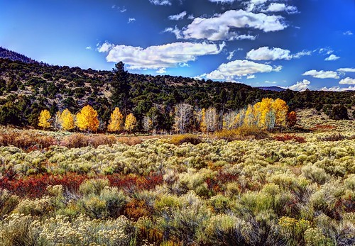 blue trees red sky white mountains green yellow river colorado gray evergreens joeldeluxe shrubs hdr riparian alamosa topazadjust
