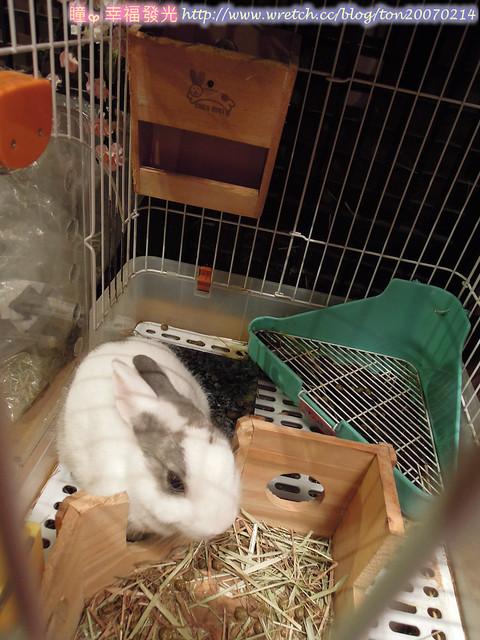rabbit (13)