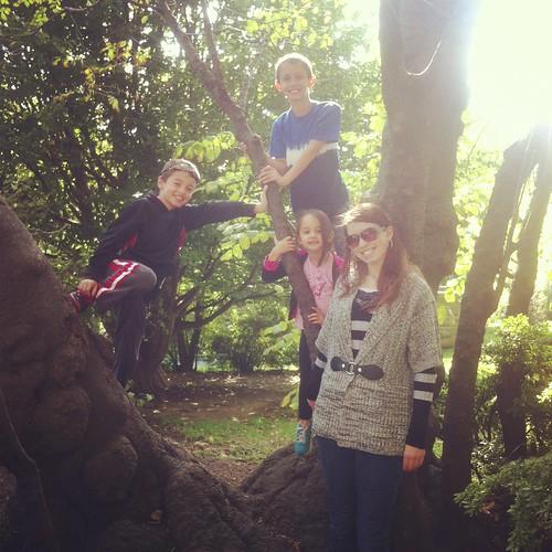 WPIR - my tree climbers