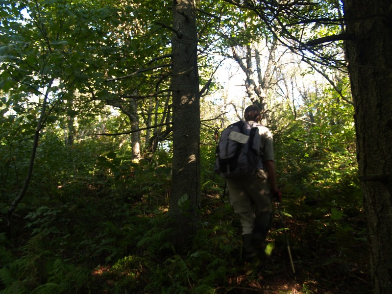 Nearing the Upper Plateau While Bushwhacking Up Rusk Mountain