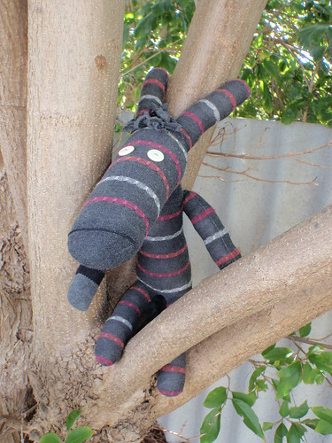 Delilah the Sock Donkey, climbing a tree