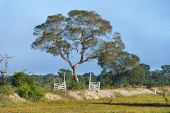 The tree and the gate