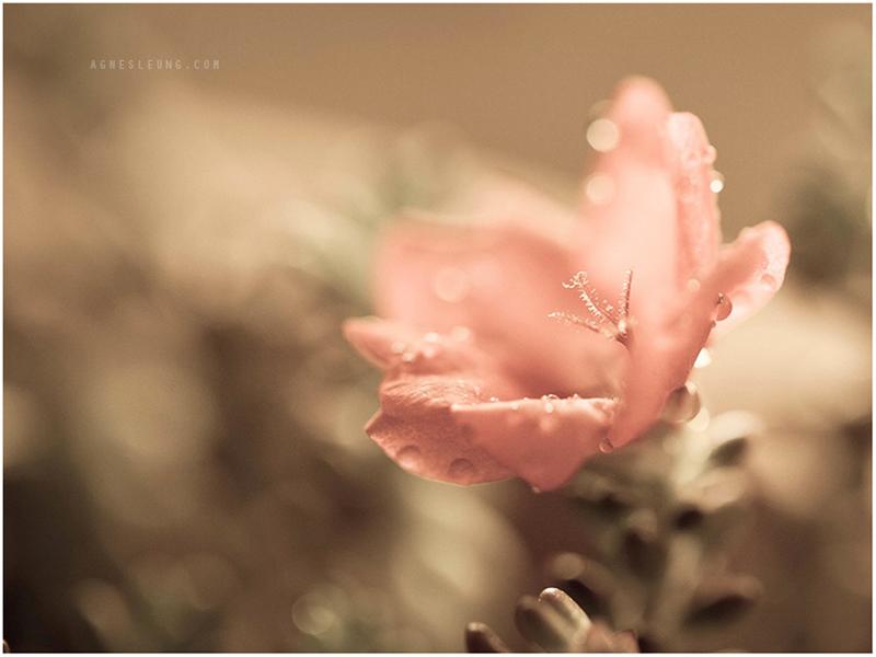 succulent-s14