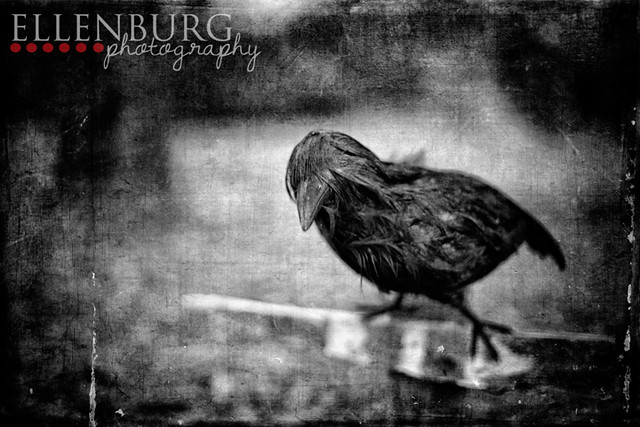 FB 121018 bird-02manhatburn bw