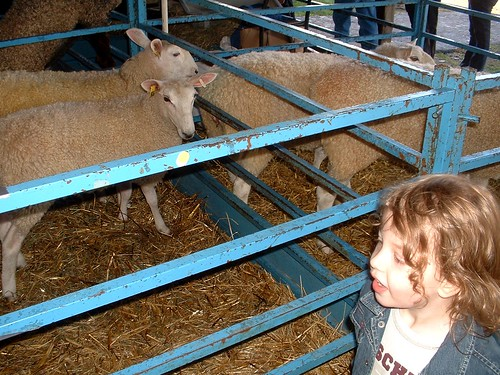ny sheep and wool 2012 7