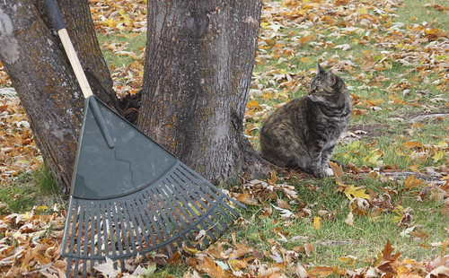 Leaf Raking Supervisor
