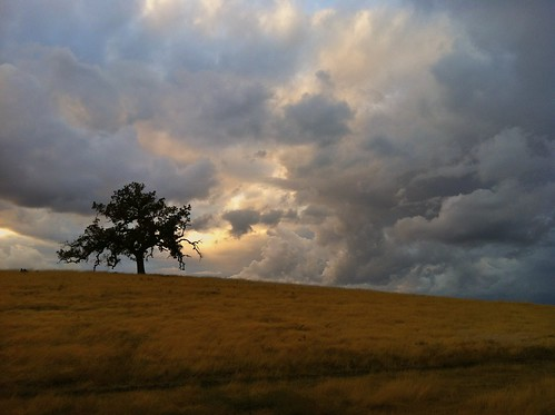california sky foothills storm tree colors clouds landscape oak folsom grasses prairie iphone iphonography ernogy