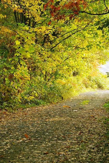 色づく散歩道3