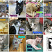 October adoptions by Goathouse Refuge