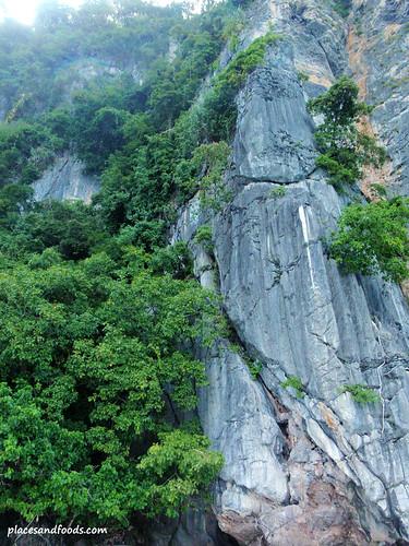 phi monkey forest