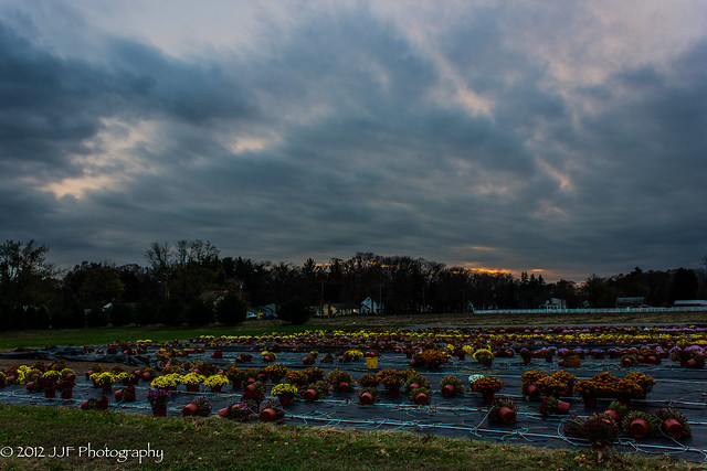 2012_Oct_31_Nursery Sunset_004