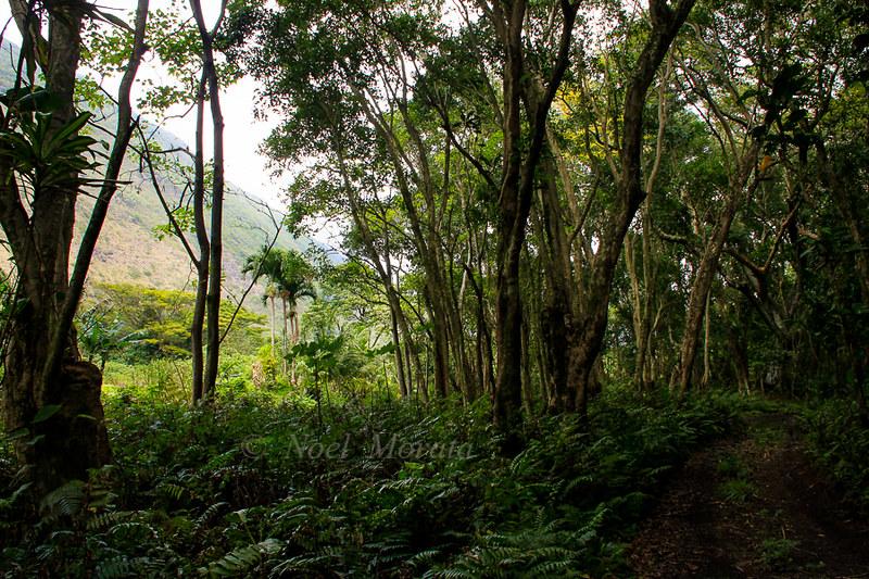 Waipio Valley, interior road landscape