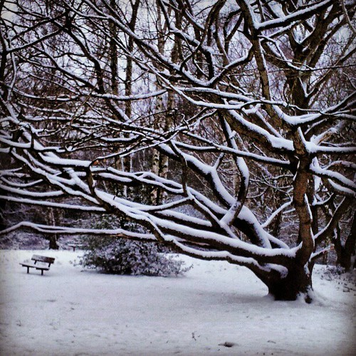 Hampstead Heath. Nature's monochrome. by Pete Woodhead