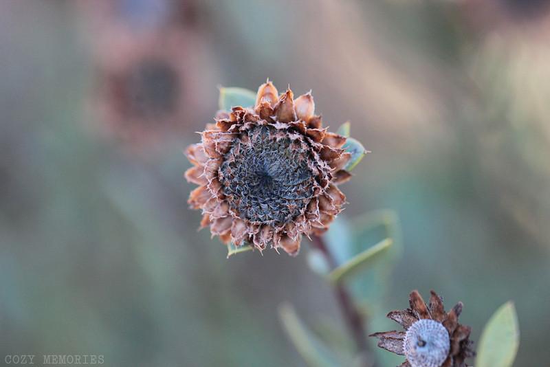 winter vegetation