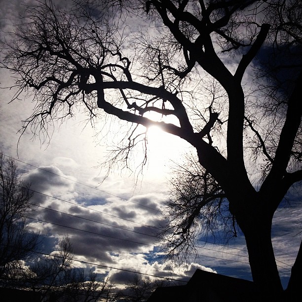 Day24 beautiful warm day today :) so nice to see the sun! 1.24.13 #jessie365 #wyoming