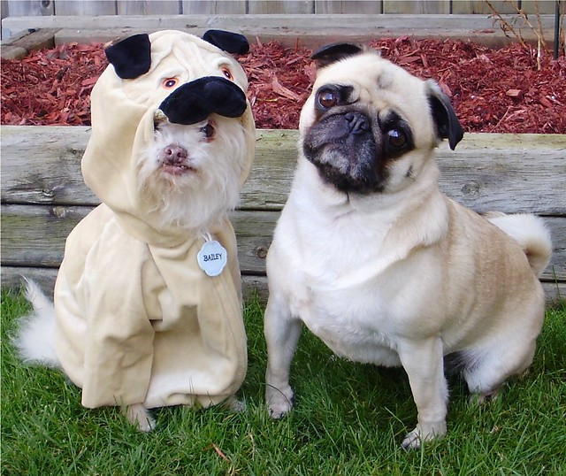 Real Pug or Imposter - Identity Theft on Social Media